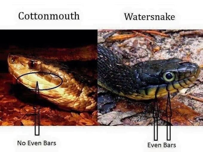 The Deadliest Snakes In The Worl