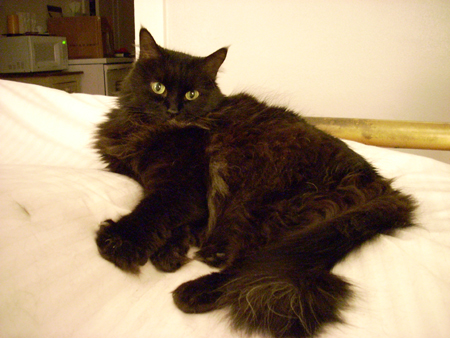 The Undertaker Hd Wallpaper All Wallpapers Fat Black Cats