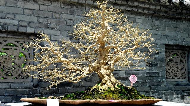 The art of Chinese Penjing Bonsai - Landscape Bonsai