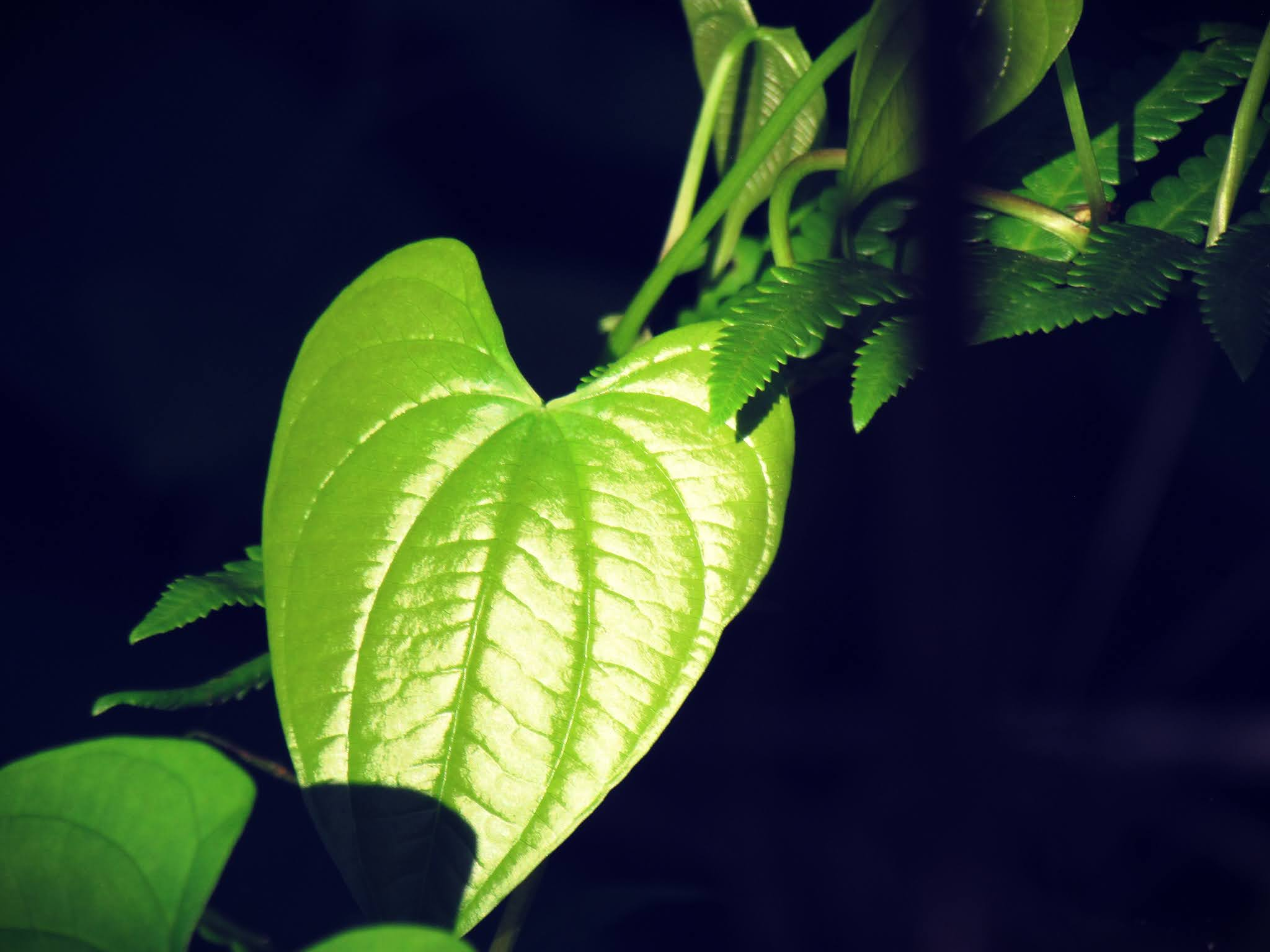 An emerald green, heart-shaped leaf in the heart of a faery forest with enchanted woodland energy