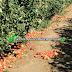 Incredible day Apple Picking at Bilpin, NSW, Australia