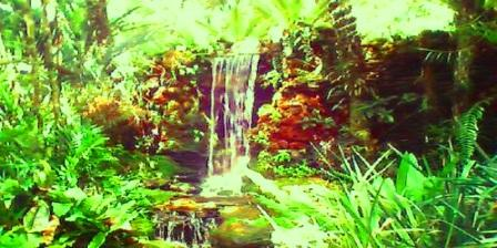 kebun raya bedugul kebun raya bedugul tabanan kebun raya bedugul di bali kebun raya bedugul adalah kebun raya bedugul harga tiket masuk kebun raya bedugul