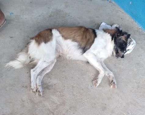 VÍDEO: Moradora denuncia envenenamento de cães e gatos na comunidade de Córrego, zona rural de Grossos