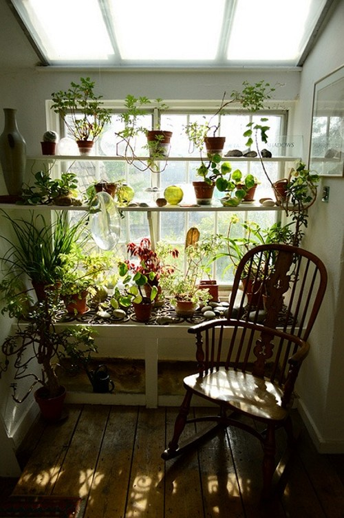 Plantas no interior - Indoor plants