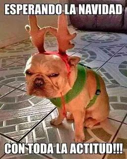 perro con cuernos de reno enfadado en navidad