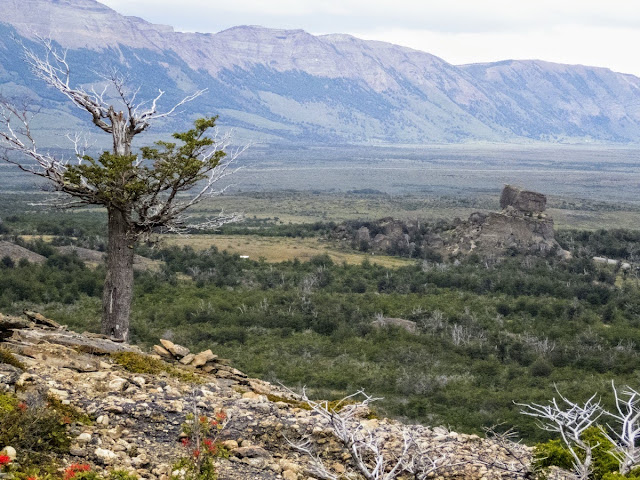 Patagonia Birdwatching: Tree and mountain view above the Mylodon Cave near Puerto Natales Chile