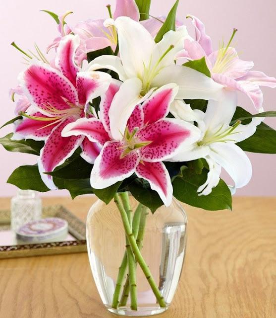 hinh anh hoa ly dep nhat 4