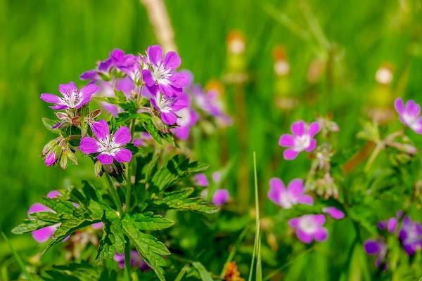 Como las plantas con flores conquistaron el mundo