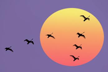 Aves voando em bando