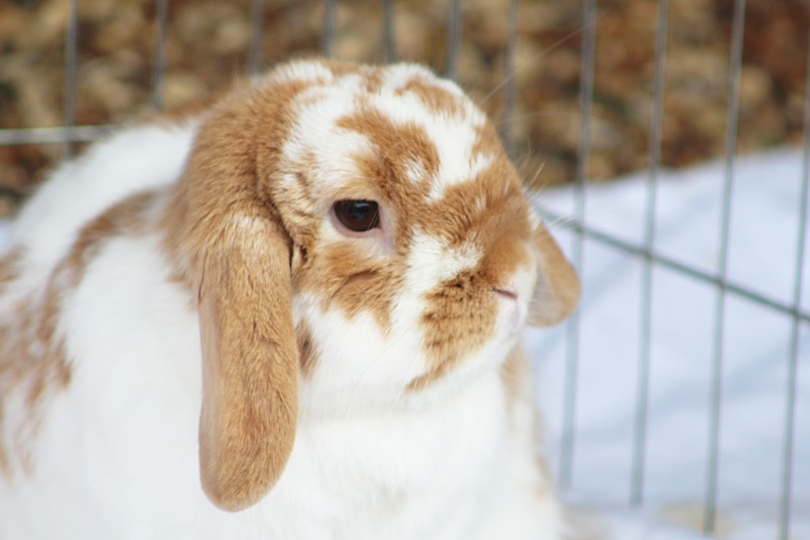 Please Don't Buy a Bunny as an Easter Present