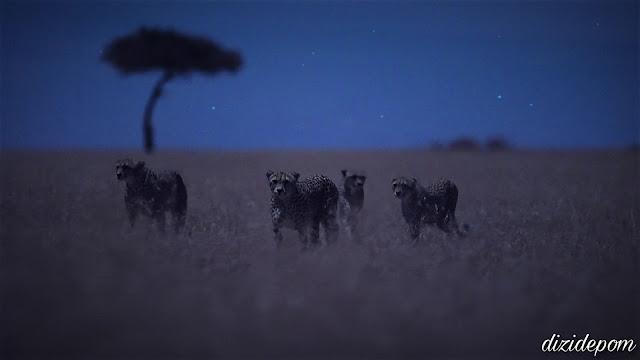 Night on Earth (Dünya'da Gece) Dizisi İndir