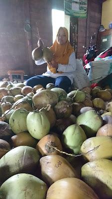 potensi kelapa kopyor dari dukuhseti kabupaten pati sangat besar