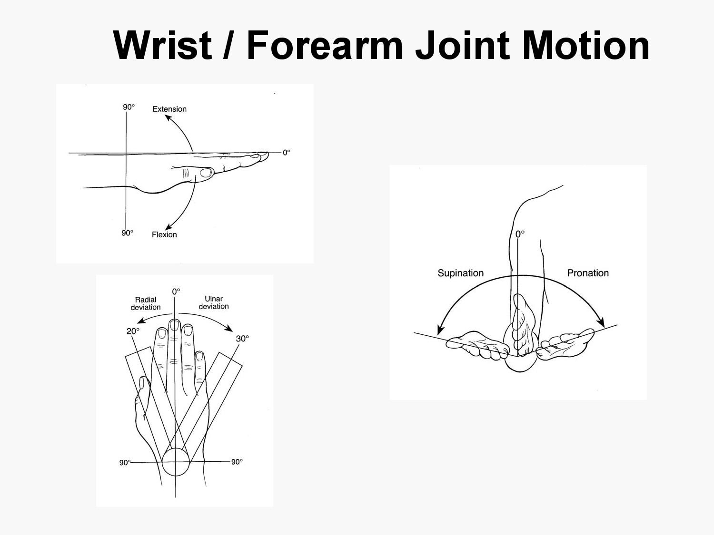 Medial Elbow Anatomy Diagram