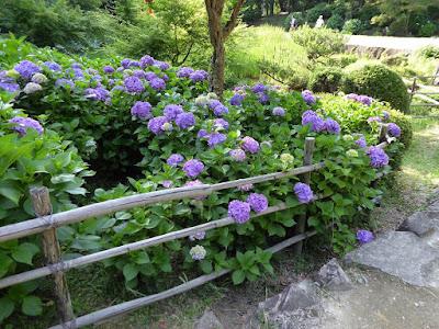 山田池公園のあじさい園