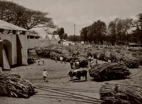 praktik sistem ekonomi liberal di indonesia, pabrik gula nganjuk