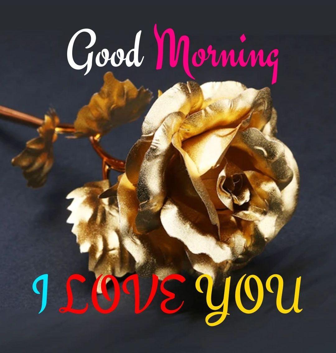 Good Morning Golden Rose