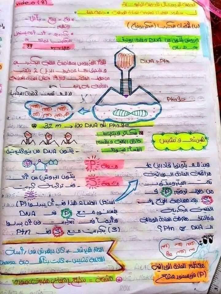 اقوي ملخص DNA تالته ثانوي 8