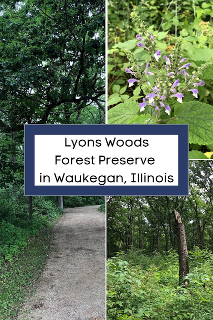 Enveloped in a Dense Green Forest at Lyons Woods Forest Preserve in Waukegan, Illinois