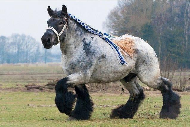 Resultado de imagen para caballo percheron