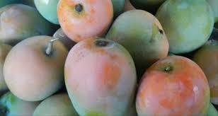 buah mangga gincu merupakan makanan khas majalengka