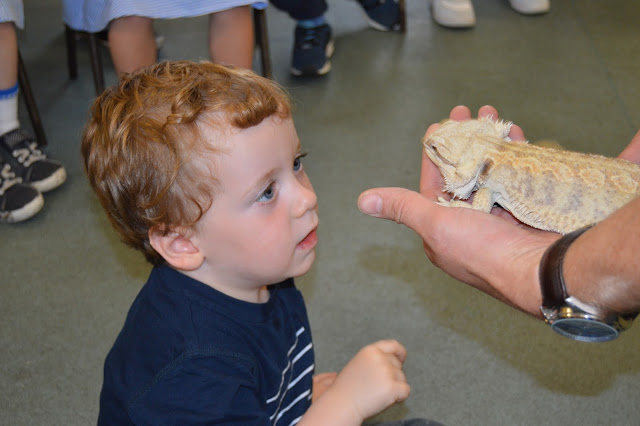 boy looking at a bearded dragon