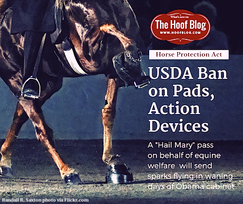 USDA Soring Rule Change Bans Hoof Pads on Walking Horses