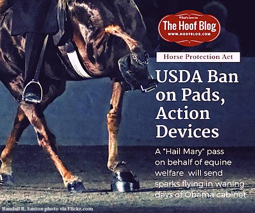 USDA Soring Rule Change Bans Hoof Pads on Walking Horses
