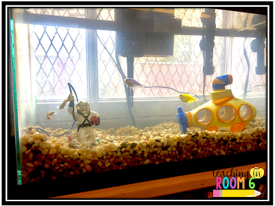 Science standards come to life with a fish tank in the classroom