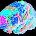 Dopo cecità cervello sa riattivare 'software' della vista