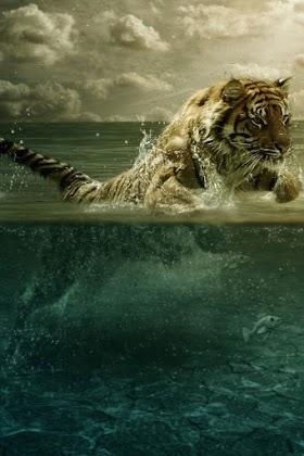 Chúa Sơn Lâm Nô Đùa Với Nước