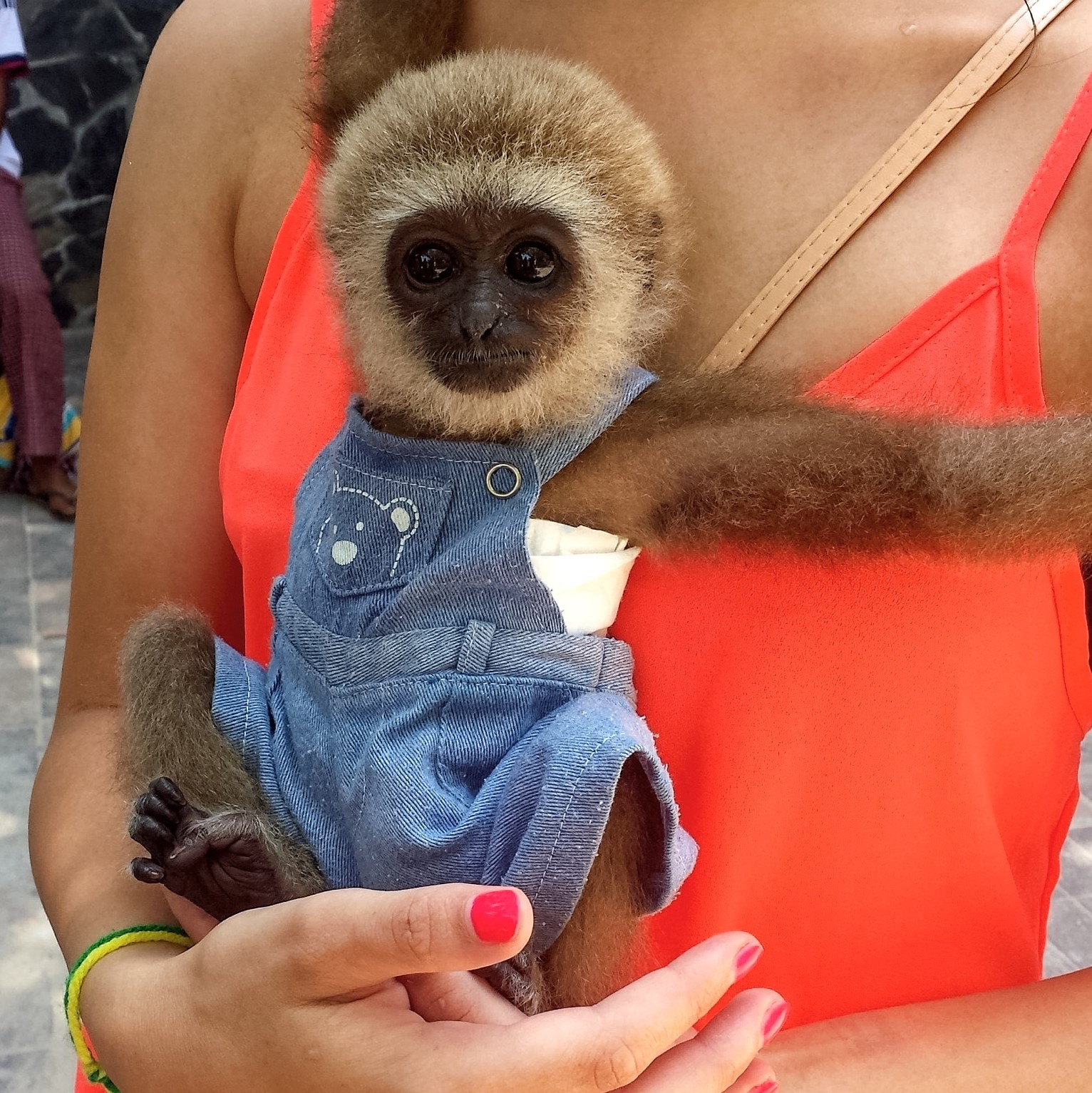 monkey on phi phi island thailand