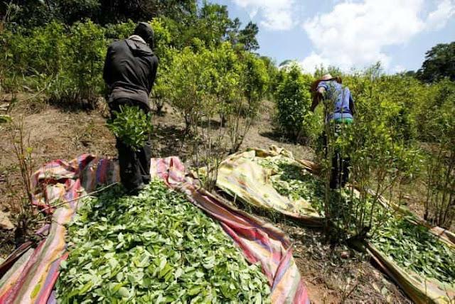 EE.UU dice que la Colombia de Santos y Uribe aumentó en 2017 la producción y tráfico de cocaína