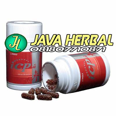 harga obat herbal icp capsule