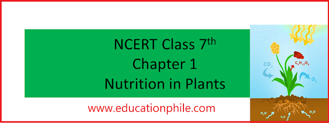 NCERT Class 7th Science Chapter 1 Nutrition in Plants, UPSC, CTET TGT, CTET Paper II, NCERT Science Solutions, NCERT Solutions, NCERT Solutions Class 7, NCERT Solutions, www.educationphile.com