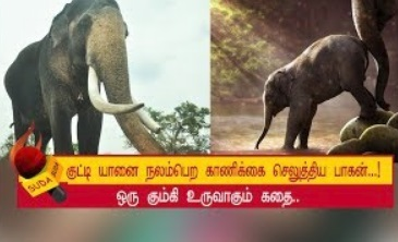 Story of making of a kumki elephant episode 11