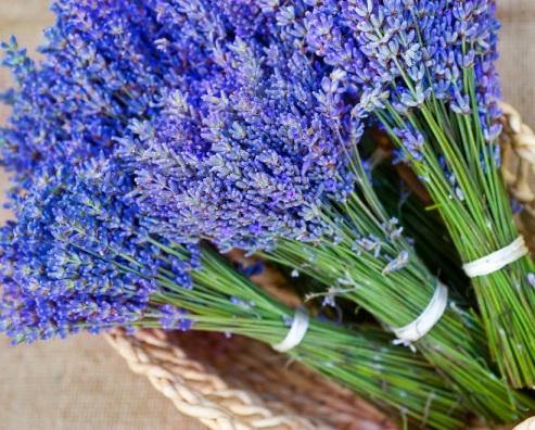 mengusir lalat dengan bunga lavender