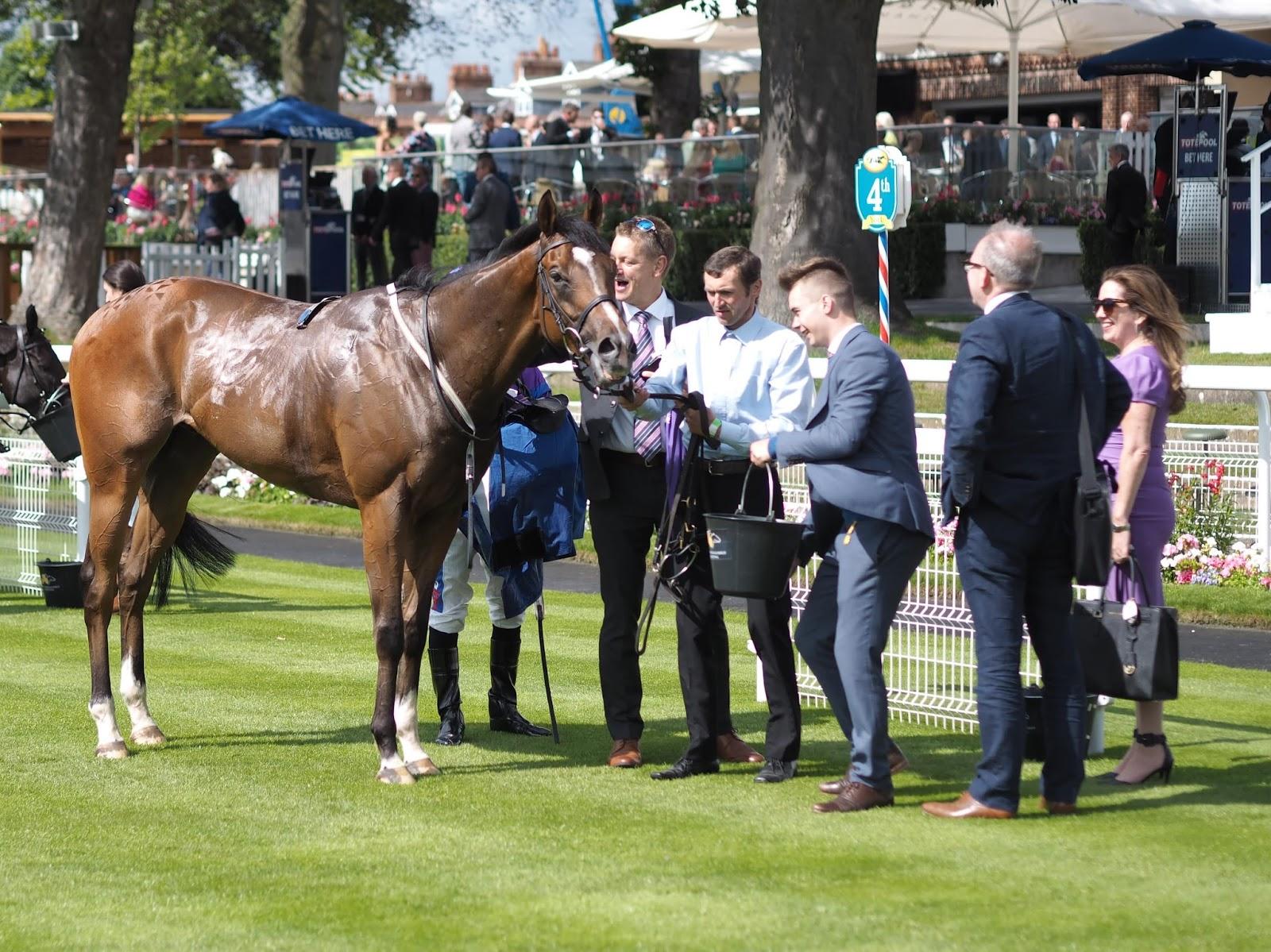 York Races, Novoman