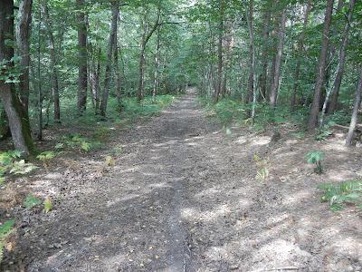 randonnée bushcraft dans la forêt de Pontigny - Yonne