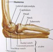 Pengertian Tennis Elbow (Epicondylitis Lateral) Serta Anatomi, Etiologi, Dan Pemeriksaan