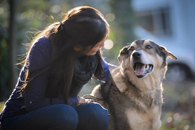 zoonotic diseases from pets