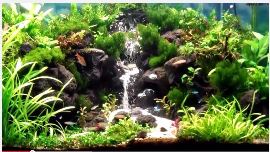 vinhaqua.com - Hồ thủy sinh trọn bộ - Suối thác 4