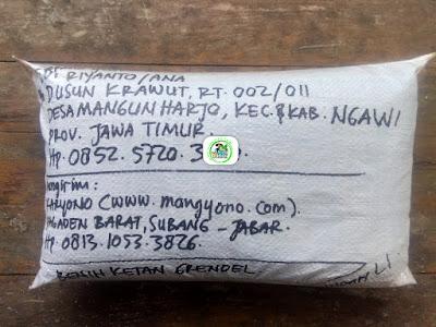 Benih Ketan Pesanan   EDI RIYANTO Ngawi, Jatim.  (Benih Sesudah di Packing)