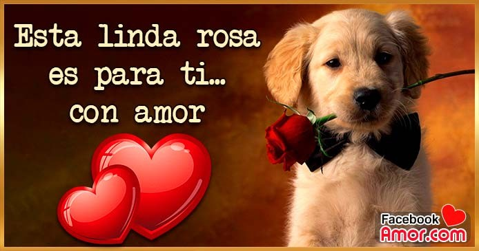 esta rosa es para ti amor