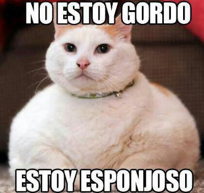 meme de un gato gordo