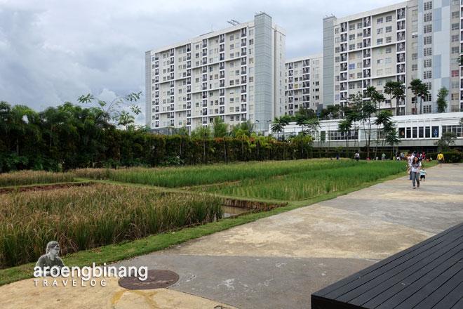 petak sawah scientia square park tangerang
