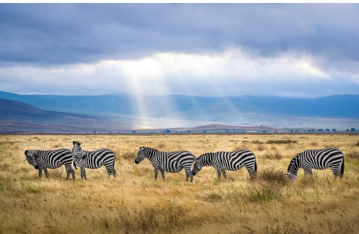 visit-cost-kenya-4