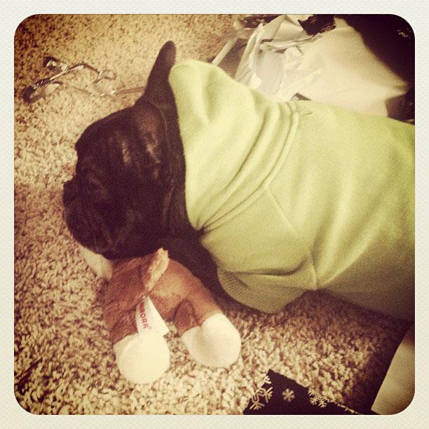 leroy sleeping on his new toy