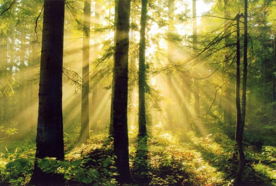 Batang CAntik dari Fotografi Foto Landscape dengan Hutan Yang Luar Biasa Cahaya dan Backligth Indah