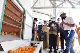 Andi Sudirman Dorong Sulawesi Selatan Jadi Provinsi Mandiri Benih Jagung