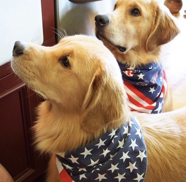 Golden Retrievers American Flag Bandana